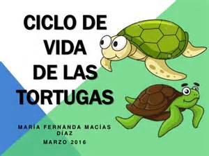 imagenes de ciclo de vida de la tortuga act 6 ciclo de vida de las tortugas