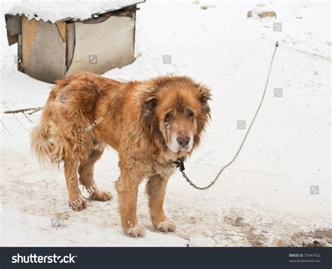 dog guards for house clever dog guards house stock photo 75947422 shutterstock