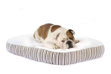 dog rs for bed bowser dog beds canada folding dog bed anufacturers at