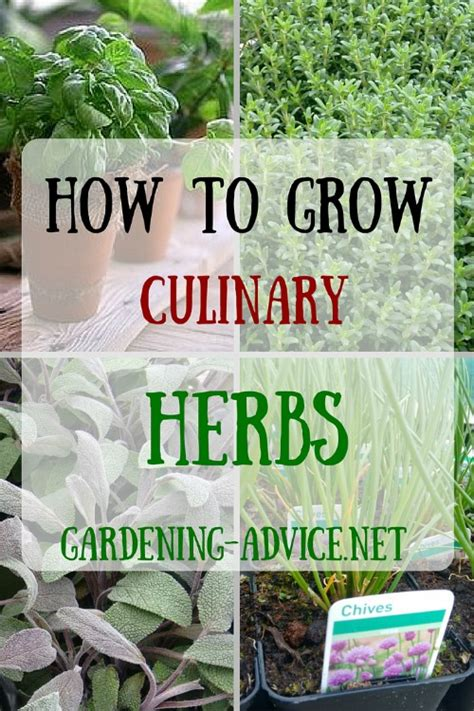 herb garden basics planting herbs for a basic herb garden you can have