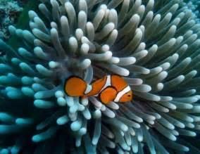 great barrier reef crystalinks