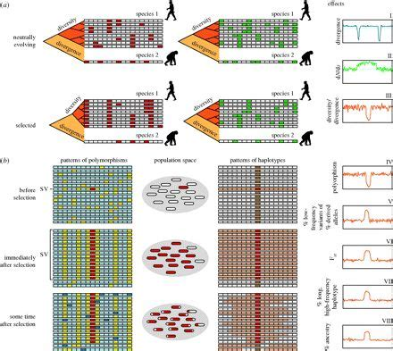 figure 1. | haplotype figures | pinterest | genetic
