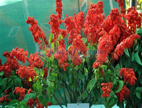 Saliva Syari Pink Bergo Saliva beautiful flower of salvia