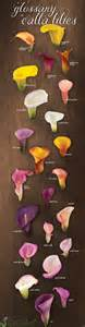 colored calla lilies from california colored calla lily
