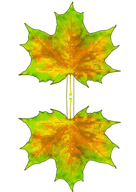 printable fall leaf decorations yellowing autumn maple leaf decoration rooftop post