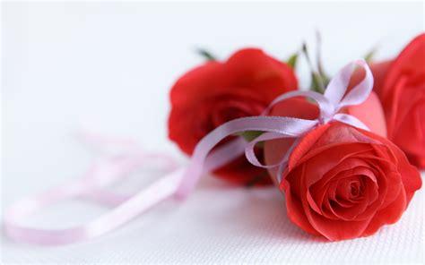 wallpaper download flower rose rose flower wallpaper