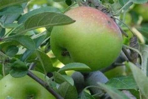 Minyak Zaitun Di Malang 260 ribu pohon buah di malang rusak kenapa republika