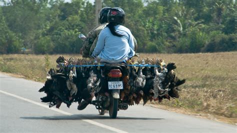 Auto Mieten In Vietnam by Verr 252 Ckt Unglaublich Lustig Mopeds In Vietnam Und