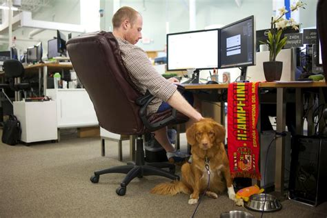 what to do with puppy when at work all day do you allow dogs at work robert half