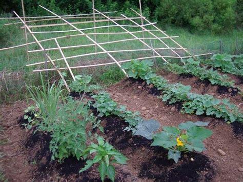 squash trellis montagnard trellis for squash and melons garden ideas