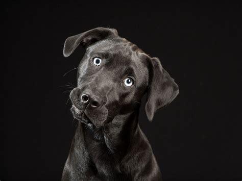puppy light the black dogs project sheds light on black