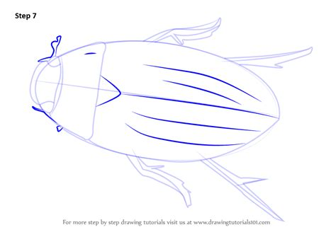 how to draw a water line on a model boat learn how to draw a water beetle beetles step by step