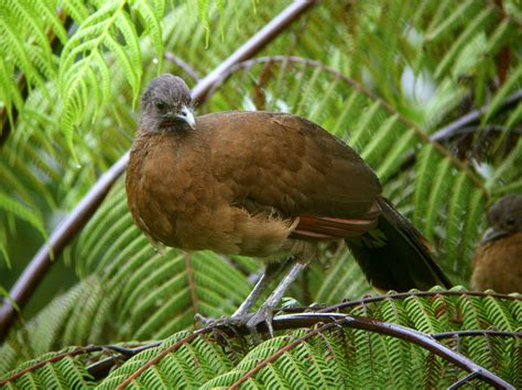Que Es Home Design 3d Chachalaca Wallpapers First Hd Wallpapers