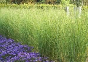 garten sichtschutz pflanzen schnellwachsend schnellwachsende sichtschutzpflanzen