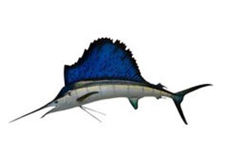 sailfish boat emblem jumping sailfish stock vector illustration of sharp