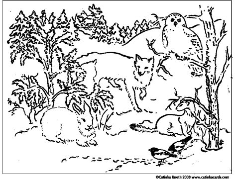 free coloring pages animals in winter coloring pages winter animals