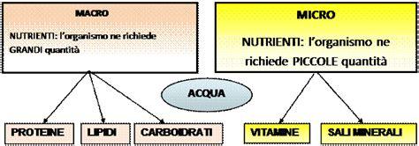 in quali alimenti si trovano gli aminoacidi principi nutritivi