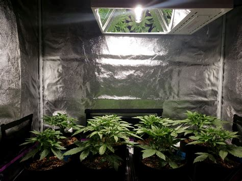 how far should led grow lights be from plants how far should grow lights be from cannabis plants grow