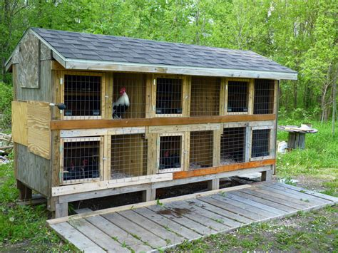 chicken coop design ideas homestartx com