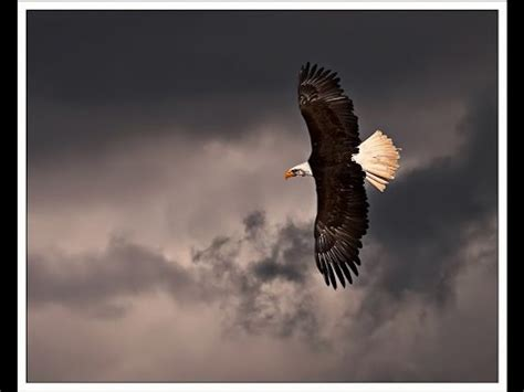 storm of eagles the tradcatknight radio quot eagles the storm quot youtube