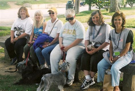 therapy international what is therapy dogs international therapy dogs international tdi is a breeds