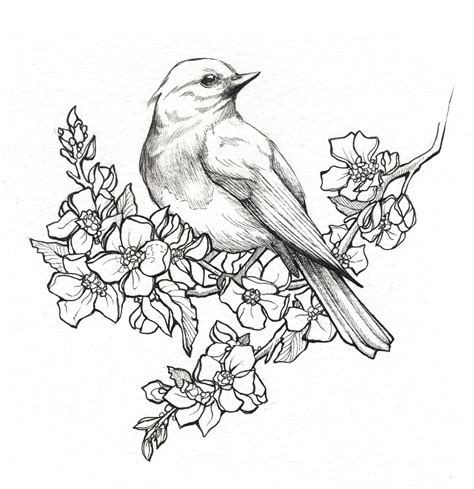 state birds amp flowers on behance