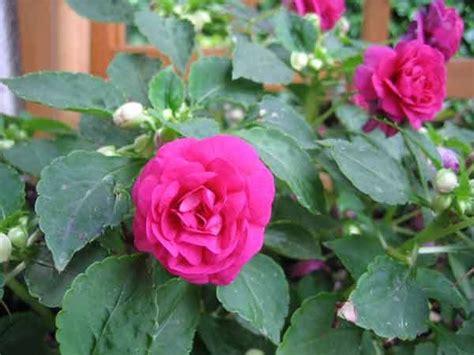 fiori giugno la auberge fiori e frutti di giugno