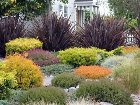 foundation plants for front yard plant combination outside gardens drought
