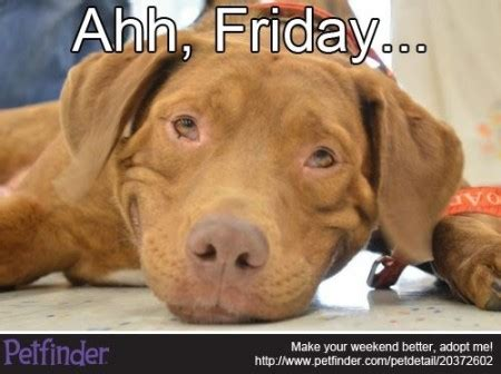 Weekend Dog Meme - dog day friday page 2 pawsitively pawsh dog salon