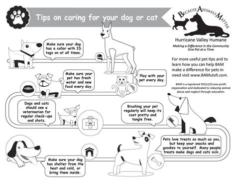 8 Tips On How To Choose A Vet For Your Pet by 13 Best Images About Pet Care Best Tips On