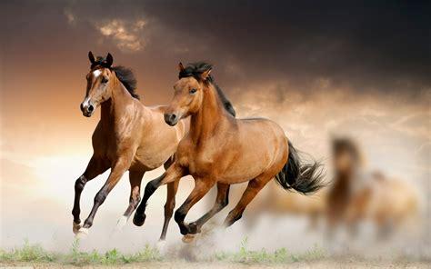brown horses galloping wallpaper hd