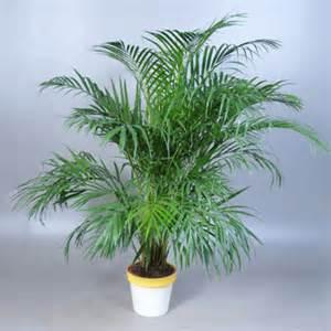 s 233 lection des plantes d 233 polluantes pour assainir