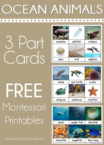 free printable montessori three part cards montessori archives 1 1 1 1