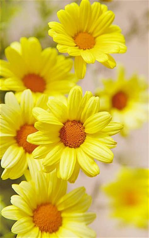 Jig006 To Survive Nature Yellow the 25 best yellow flowers ideas on flowers