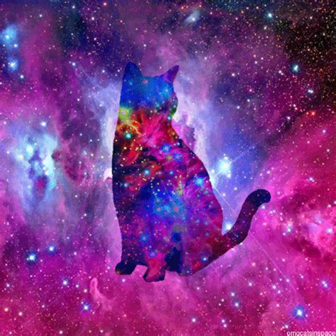 space cat wallpaper tumblr omg cats in space gif tumblr