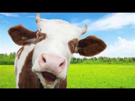 adele ft goat adele hello screaming goat edition doovi