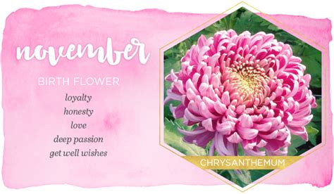 november flower image gallery november flower