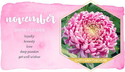 image gallery november flower image gallery november flower
