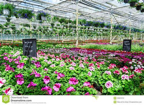 Garden Center Flowers Garden Center Flower Market Stock Photography Image