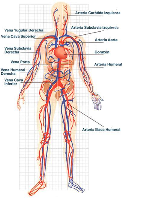 el cuerpo humano 848016977x conductores de sangre sistemas del cuerpo humano blog s