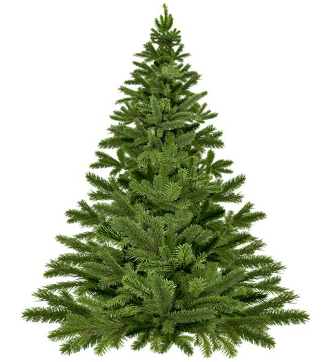 meadow fir 10 christmas tree images sapin de no 235 l arbre pin 183 free image on pixabay