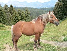 fjord quizlet de meest vergeten paardenrassen quizlet nl
