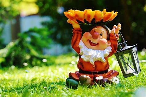 garden gnome free photo garden gnome lantern sweet free