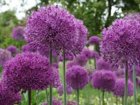 plants blooming 11 spring blooming bulbs landscaping ideas and hardscape