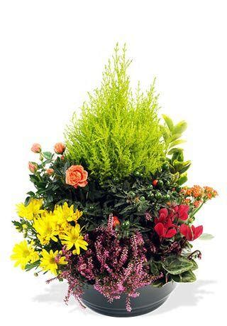 Fleurs Qui Resistent Au Vent by Que Choisir Pour Fleurir Une Tombe Pour La Toussaint 192