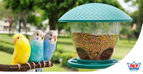 comederos  aves cuales son los alimentos  aves
