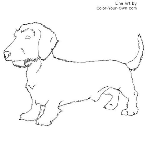 cute baby weiner dog coloring pages coloring pages