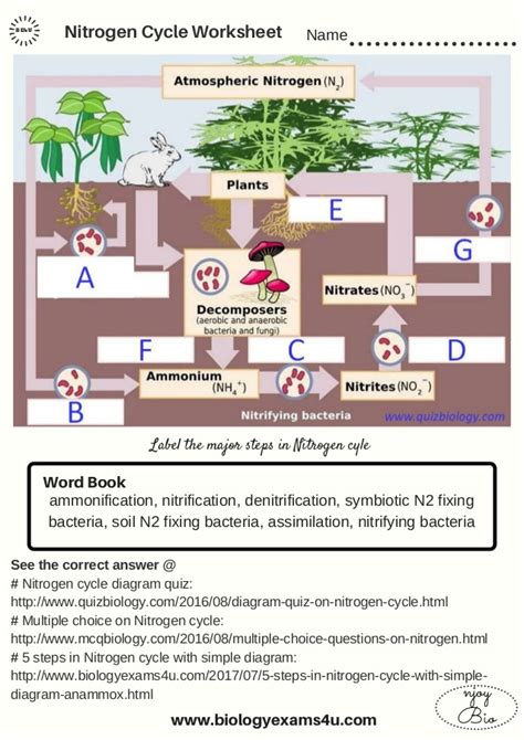 The Nitrogen Cycle Worksheet Answers by The Nitrogen Cycle Worksheet
