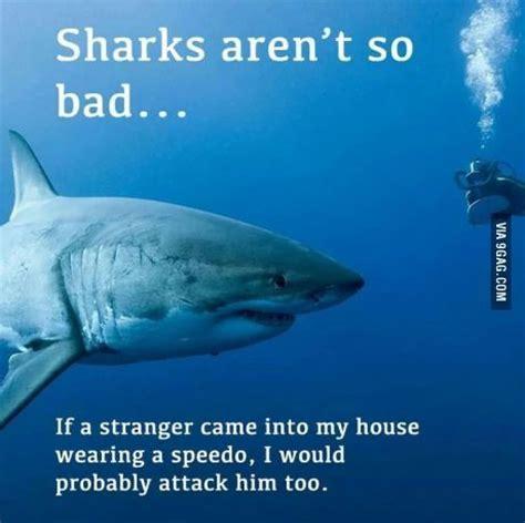 Sad Shark Meme - best 20 shark meme ideas on pinterest funny sharks