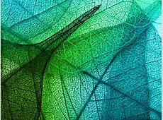 vm02-leaves-art-green-blue-pattern - Papers.co Macbook Pro